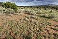 Near Big Pine Canyon - Flickr - aspidoscelis.jpg