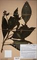 Neuchatel Herbarium Types NEU000113004.tif