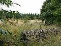 New broad leaf plantation by Falfield. - geograph.org.uk - 80089.jpg