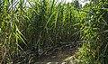 Niedru labirinti pie Ota ezera. - panoramio.jpg