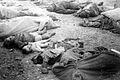 Nordhausen Concentration Camp.jpg