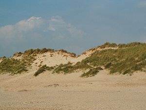 Geography of the European Netherlands - The coastal dunes are vital to the existence of areas of the Netherlands.