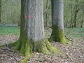 Numbered trees in News Wood - geograph.org.uk - 916128.jpg