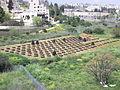 Nursery in Jerusalem (3430757269).jpg