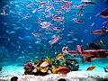 Ocean park wiki.jpg