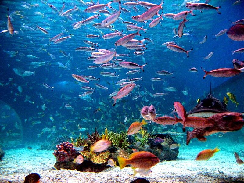 File:Ocean park wiki.jpg