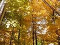 October trees - 2012.JPG