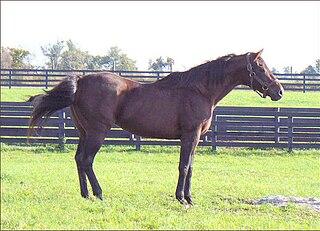 Ogygian American-bred Thoroughbred racehorse
