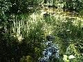 Oja Prastvike järve lähedal -Near Prastvike lake - panoramio.jpg