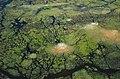 Okavango delta a slon (Elephant) - panoramio.jpg