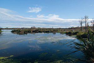Travis Wetland - Travis Wetland in 2014