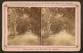Orange archway, Mrs. Ball's grove, from Robert N. Dennis collection of stereoscopic views.png