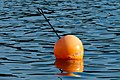 Orange buoy in water.jpg