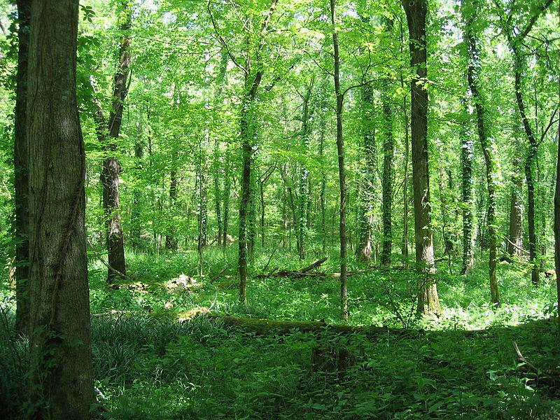 File:Otter Creek Park 2.jpg