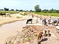 Pâturage nord Bénin.jpg