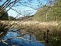 Pölzer Fließ im NSG Gramzow-Seen 25-04-2010 372b.jpg