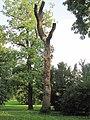Přerov, park Michalov, vyřezávaný strom.jpg