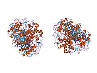 Beta-ketoacyl-ACP synthase - Image: PDB 1oxh EBI