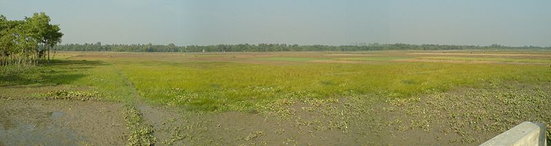 File:Panoramic view of crop field.JPG