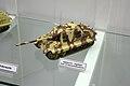 Panzermuseum Munster 2010 0341.JPG