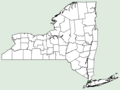 Papaver argemone NY-dist-map.png