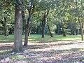 Park - Brwinów 27, ul. Dworska 5.jpg