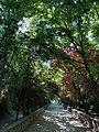Parque de Castril (44397490315).jpg