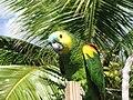 Parrot-BVI 2.jpg