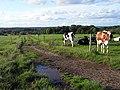 Pasture, Padworth - geograph.org.uk - 1560599.jpg