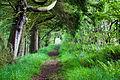 Path (3517766585).jpg