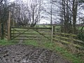 Path and Mud Tracks - geograph.org.uk - 346648.jpg