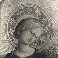 Pesello, testa di madonna.jpg