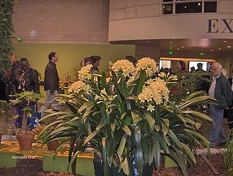 Philadelphia Flower Show - Image: Philadelphia Flower Show 2011 HPIM4366