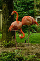 PhoenicopterusRoseus.jpg