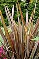 Phormium tenax Plant 2000px.jpg