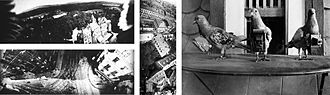 Pigeon photography - Top left: Aerial photographs of Schlosshotel Kronberg. Bottom left and center: Frankfurt. Right: Pigeons fitted with cameras.