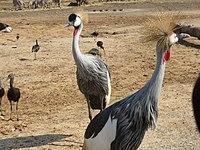 PikiWiki Israel 53077 wildlife animals.jpg