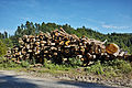 Pile of wood Rüti bei Büren.jpg