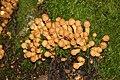 Pilzfruchtkörper im Wald südwestlich des Parkplatzes Irenkreuz, Landkreis Rhön-Grabfeld III.jpg