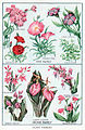 Pink and Orchid Family Btwn 358 and 359.jpg