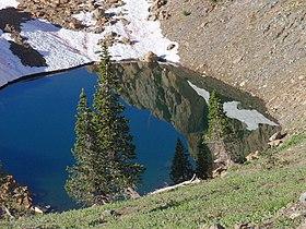 Pinus balfouriana Trinity Alps 01.jpg