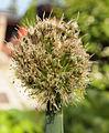 Plant on yard.jpg