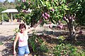 Planta empacadora de mango, en La palma Nayarit - panoramio.jpg