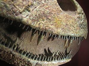 Tristichopteridae - Teeth of Platycephalichthys, in CosmoCaixa Barcelona