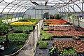 Poertschach Tscheberweg 8 garden center Zeitlberger 20052012 653.jpg