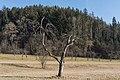 Poertschach Winklern Gaisrueckenstrasse Streuobstwiese Apfelbaum 06022016 0558.jpg