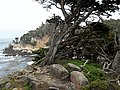 Point Lobos - panoramio (1).jpg