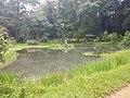 Pond View 20170706 160328.jpg