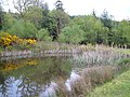 Pond in Kiddens Plantation - geograph.org.uk - 166989.jpg