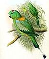 Prioniturus platurus DYK.jpg